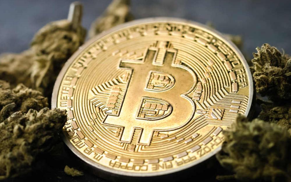 bitcoin konopna spolocnost