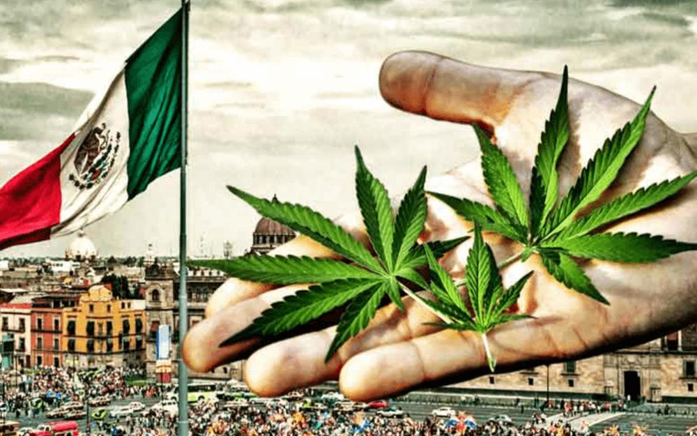 mexiko legalizacia konope