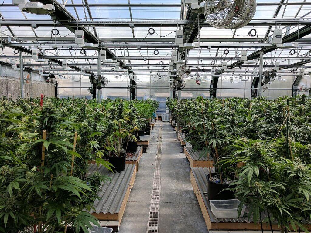 marihuanova farma parallel