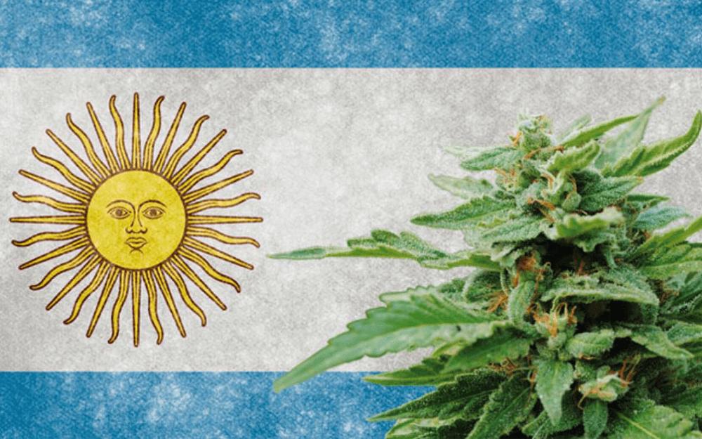argentina marihuana