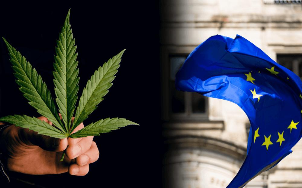 pestovanie marihuany